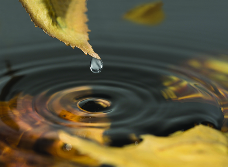 Water drops from a yellow leaf